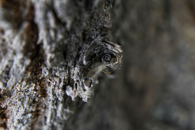 Close-up of an animal on tree trunk