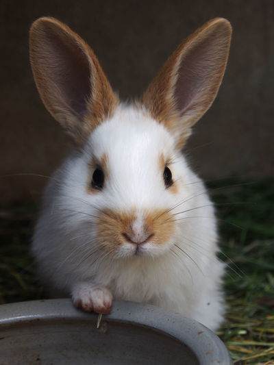 Animal Themes Baby Baby Rabbit Close-up Day Domestic Animals Eating Indoors  Looking At Camera Mammal Nature No People One Animal Pets Portrait Rabbit Sweet Sweet Animal Whisker