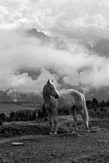 A white horse in a magical misty atmosphere
