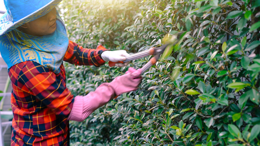 Side view of woman cutting plants