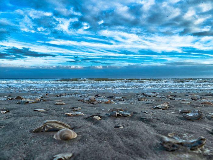 Surface level of seashell on beach against sky