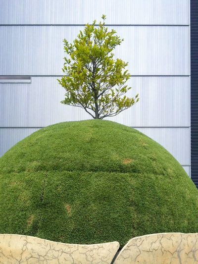 Aichi Aichi Japan Architecture Day Freshness Grass Green Color Growth Japan Midland Square Building Nagoya Nagoya City Nagoya-shi Nature No People Outdoors Sculpture Toyota-mainichi Building