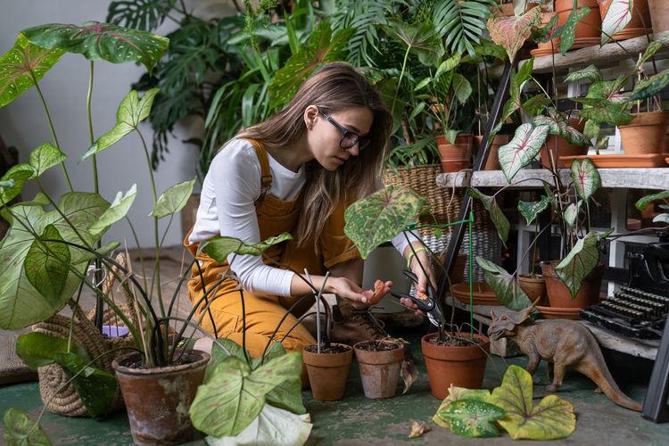 Woman gardener pruning dry withered caladium houseplant, take routine care, using scissors. hobby
