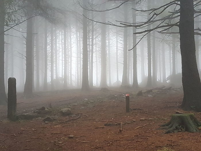 Eery Eery Woods Nature WoodLand Hike Tree Tree Area Fog Forest Nature Reserve Tree Trunk Pinaceae Spooky Branch Environment Atmospheric Mood Pine Tree Evergreen Tree Pine Wood Pine Woodland Tranquil Scene