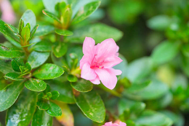 Flower Leaf Nature Plant Pink Color Botany Beauty In Nature Beauty Multi Colored Green Color Close-up Blossom Closing Social Issues Plant Part Flower Head No People Outdoors