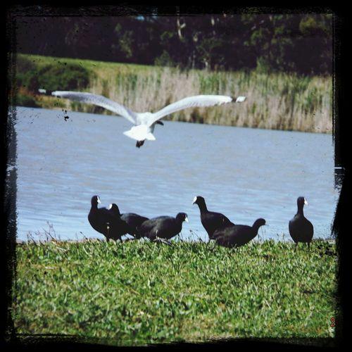 Bird Park .
