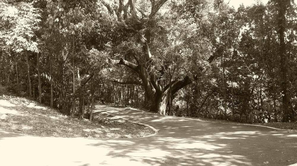 Camino viejo Old Way Old Path Sepia Panamá Ancon Hill Cerro Ancón