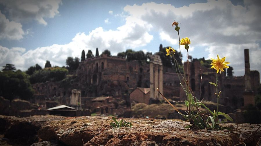 Flowers blooming on ruins at roman forum