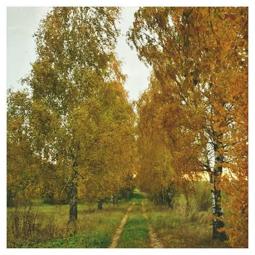 Осень-осень...краски-краски... 🍂🍁🌀 VSCO EyeEm Autumn Fall осень Autumn Colors краски осени латвия Latvia
