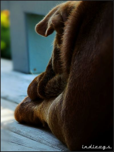 not feeling over the moon after chewing one of my herb collection; in the guilty feeling mode Taking Photos Pet Photography  Shar Pei Feeling Down