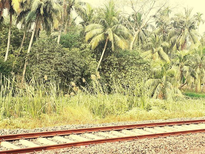 View of railroad tracks on field