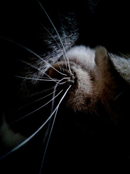 Close-up No People Indoors  Black Background Backgrounds Animal Themes Day Fragility Contortion Sleeping Furry Friend Cat Striped Kitty Cat Feline Domestic Cat Mammal Pets Light And Shadow Animal Head  Whiskers Pet Portraits EyeEmNewHere The Week On EyeEm