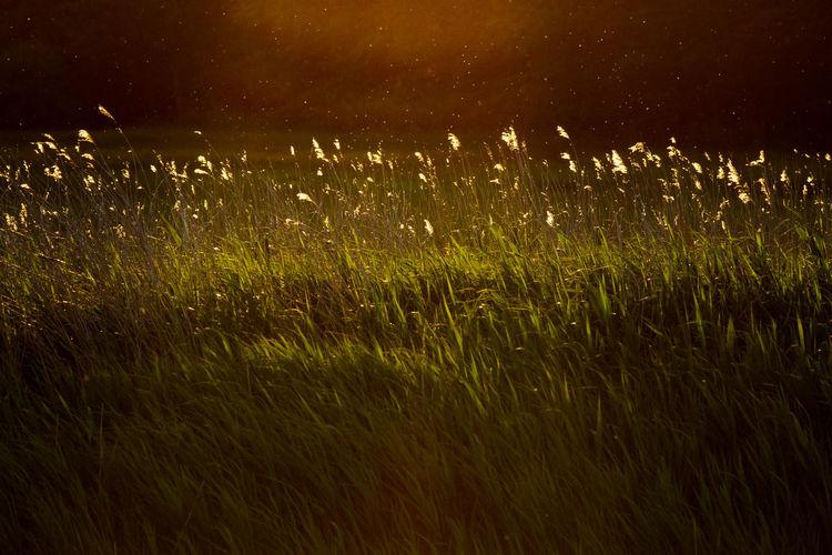 Wet grass on field at night