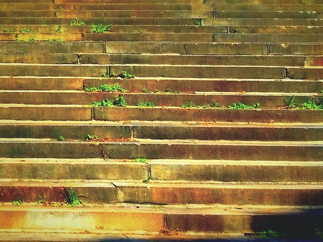 Steps Steps And Staircases Abstract Photography Grass Growing From Concrete Crack