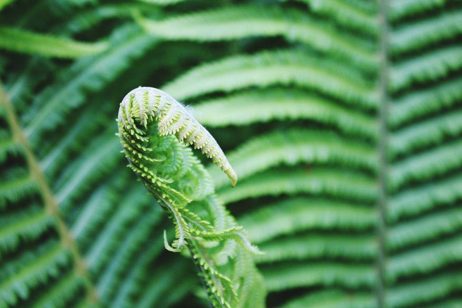 Ferns Flowers,Plants & Garden Bodnant Gardens North Wales EyeEm Nature Lover Eye4photography  EyeEm Best Shots Natures Diversities