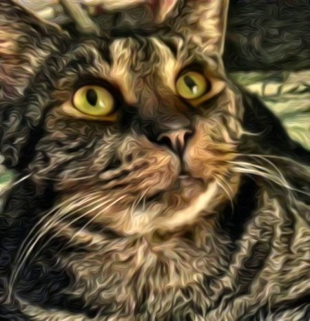 Pets Rescue Cat Baxter Cats Eyes Animal Themes Headshot Looking Up Beautiful Eyes My Buddy Home Is Where The Art Is