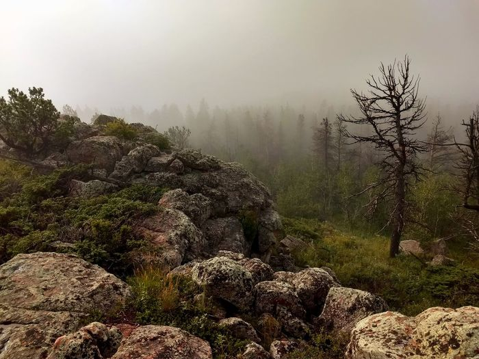 Vedauwoo Wyoming Tree Fog Mountain Dawn Forest Pine Tree Morning Environment Sky Relaxing Moments