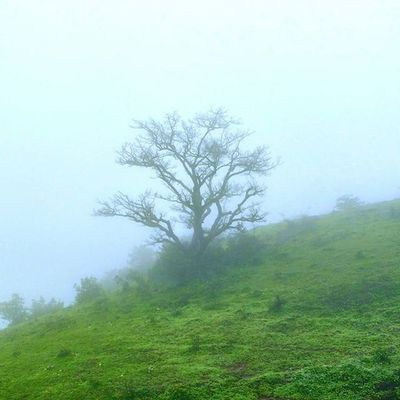 Lonely Tree Grass Landscape nature fog rain rainy monsoon anjanery nasik nashik devlali deolali clouds mountains cliff beautiful @maharashtra_ig instagram instadaily nashikgram
