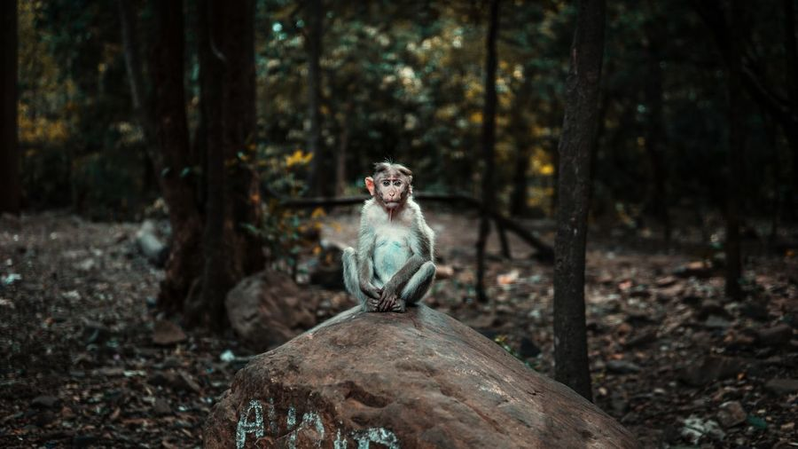 Monkey sitting on tree trunk in forest