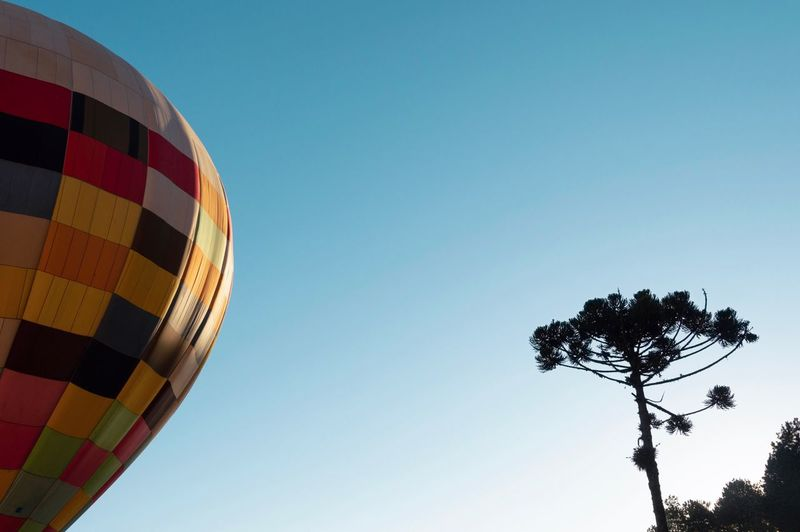 Travel Tourism Landscape Minimalism Scenics Sky Low Angle View Nature Tree Clear Sky Plant No People Day Balloon Outdoors Hot Air Balloon Blue Air Vehicle Copy Space Multi Colored Tranquility Lighting Equipment Transportation The Traveler - 2018 EyeEm Awards The Great Outdoors - 2018 EyeEm Awards Autumn Mood
