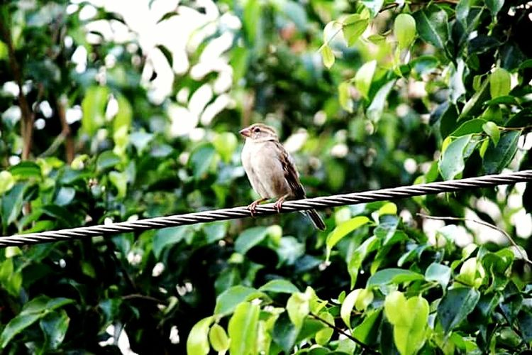 Bird Animal Wildlife One Animal Perching Day Outdoors Mourning Dove Branch Tree