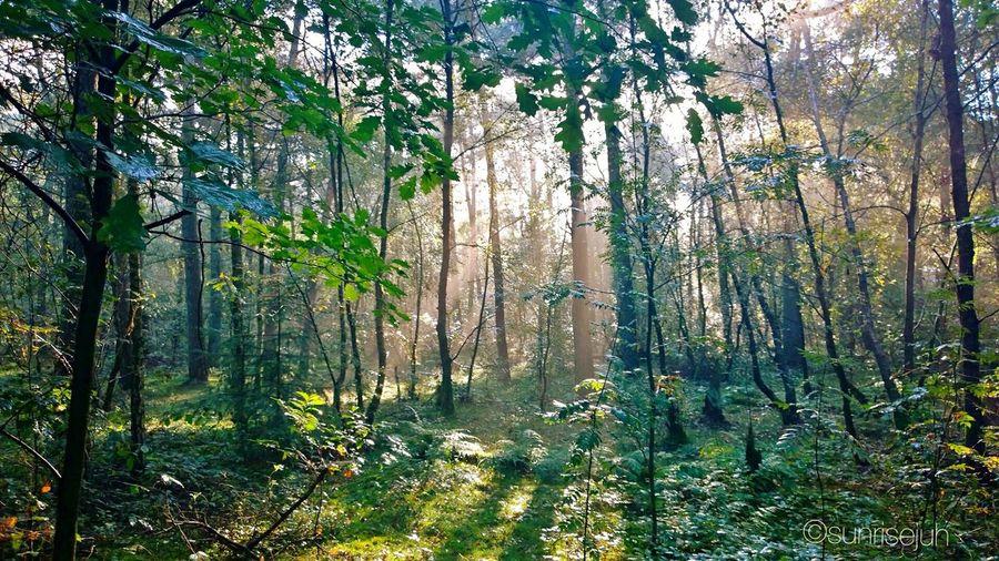 Enjoying Nature Trowbackholiday Walkabout Autumn Scenery Forrest Trees Rays Of Light Warmlight Warmautumnday Holland