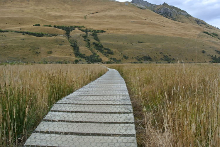 Wooden Path Marshes Farmland Long Grass New Zealand