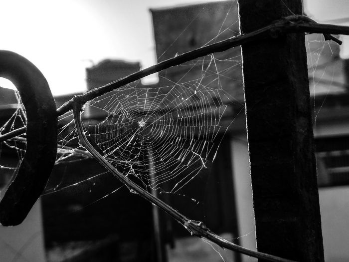 Light And Shadow Lights monochrome photography Blackandwhite Focus On Foreground Blackandwhite Spiderweb EyeEm Selects Streetphotography Rays Of Light Shining Through Trapped Spider Web Railing Close-up Architecture Wire Mesh Web Spider Arachnid Arthropod Prey Building