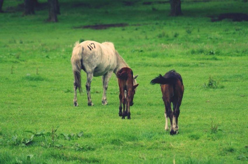 JEJU ISLAND  Jeju Horse Animals
