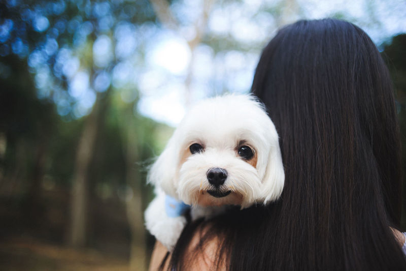 Rear view of woman holding dog