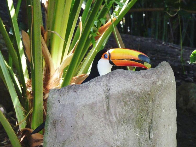 Tucan en Temaiken One Animal Day Beauty In Nature Tucan Birds🐦⛅