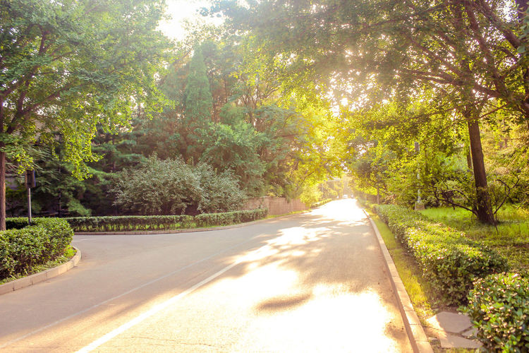 A tree-lined corridor in a park Bright Dusk Fallen Leaves Garden Golden Green Landscape Leaves Nature Open Air Outdoors Park Roadside Scenery Season  Sightseeing Sunset Sunshine Tourism Travel Trees Wood Yellow Tree Plant Road Sunlight Direction Transportation The Way Forward Growth Tranquility Day Beauty In Nature No People Shadow Green Color Tranquil Scene Empty Road Forest Street Diminishing Perspective