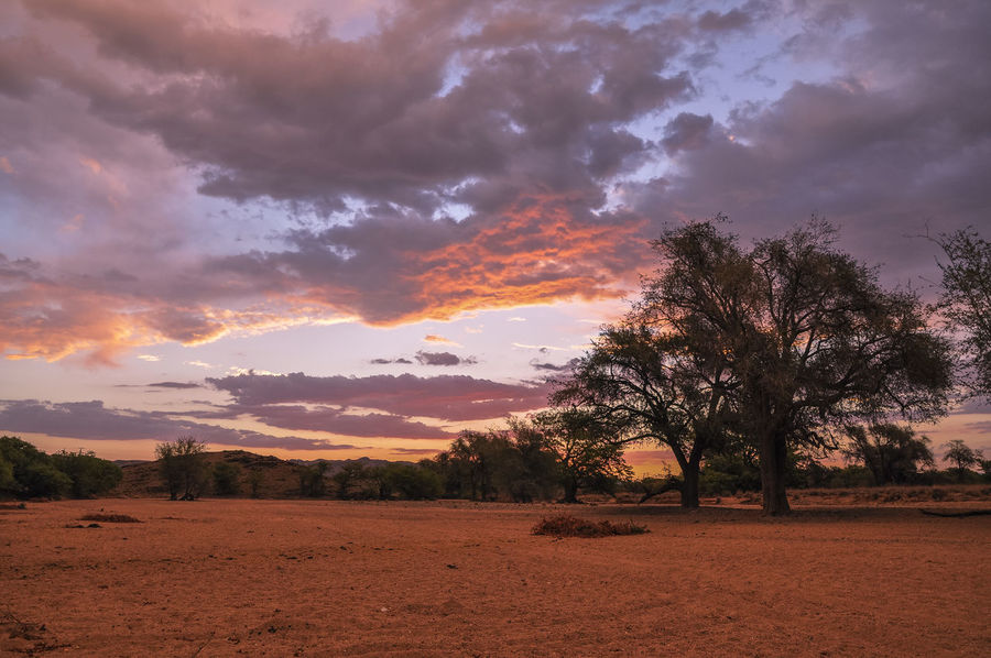 EyeEm Best Shots EyeEm Nature Lover EyeEm Gallery Namibia Sunset_collection Beauty In Nature Cloud - Sky Dramatic Sky Environment Field Idyllic Land Landscape Nature No People Non-urban Scene Orange Color Outdoors Plant Scenics - Nature Sky Sunset Tranquil Scene Tranquility Tree