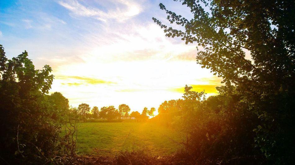 Taking Photos Sunset Love Nature Nokia Lumia 1020 Scenery Walkabout EyEmNature Trees Sunnysummerevening Skyscape Flakkee Middelharnis Mobile Photography