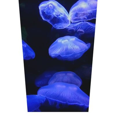 Jellyfish Vancouveraquarium