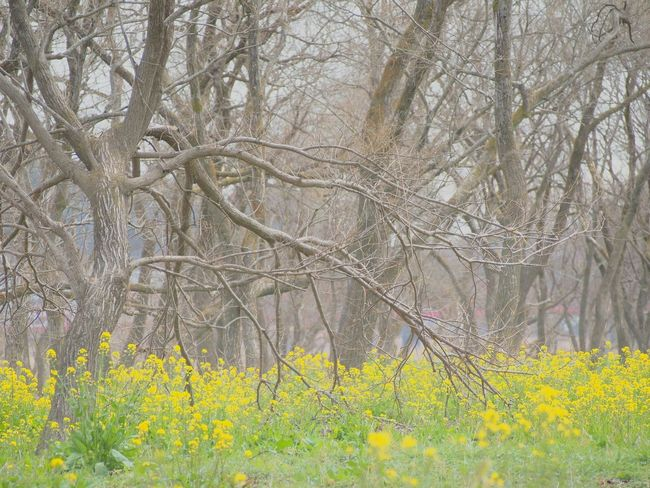 素敵な場所をみつけた(*^O^*) 菜の花 Flower お散歩 Natural Flower Collection EyeEm Nature Lover EyeEm Gallery EyeEm Best Shots Spring