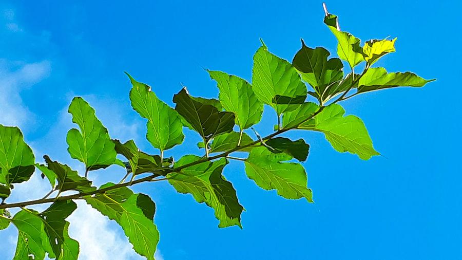 leaf sky Clear