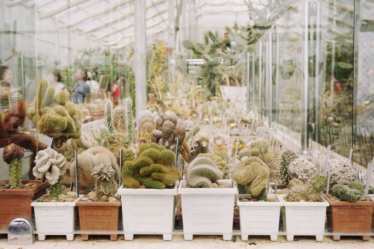 Potted plants at greenhouse