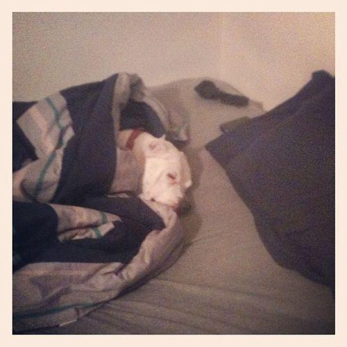 Talk about a Diva... Dogs Captainneno
