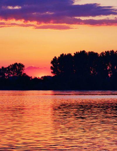 Orange Sunset Sunset Water Tree Sky Beauty In Nature Scenics - Nature Tranquility Orange Color Waterfront Nature Idyllic