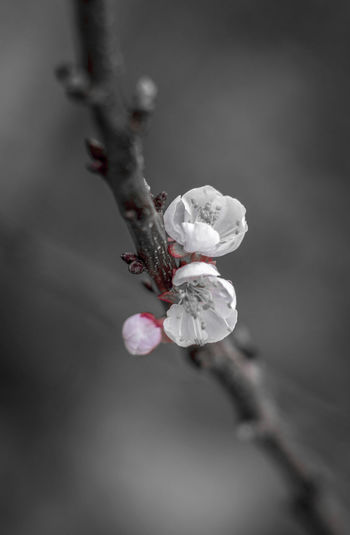 Beauty In Nature Botany Delicacy Flower Fragility Nature Pink @ Grey Springtime
