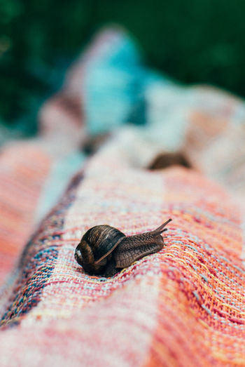 Close-up of snail on fabric