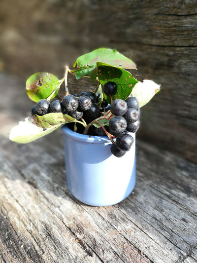 Aronia Aronia Melanocarpa Aronia Berries Aroniaberries Close-up Day Focus On Foreground Food Food And Drink Freshness Fruit Green Color Growth Healthy Eating Leaf Nature No People Outdoors Plant Plant Part Potted Plant Still Life Table Wellbeing Wood - Material