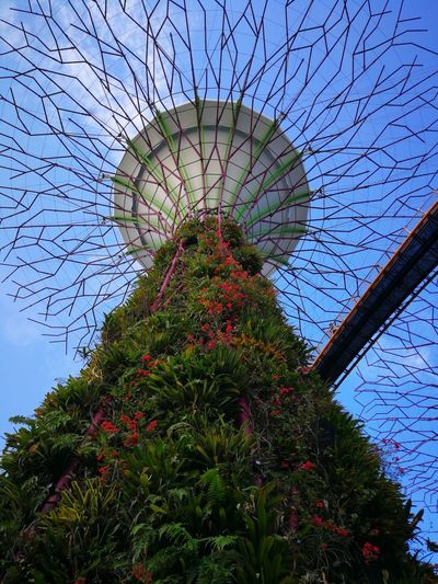 Garden by the bay Tree Flower Sky Green Color Plant Life