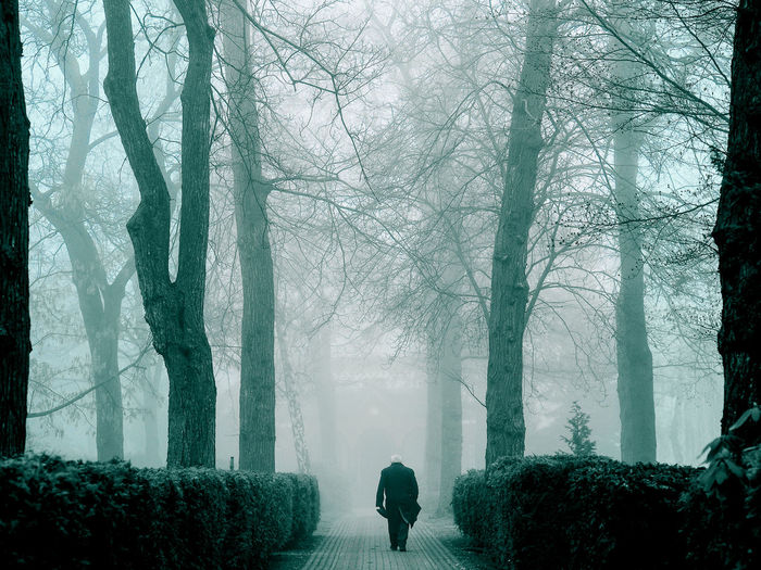 Rear View Of Man Walking On Footpath Amidst Trees And Plants During Winter