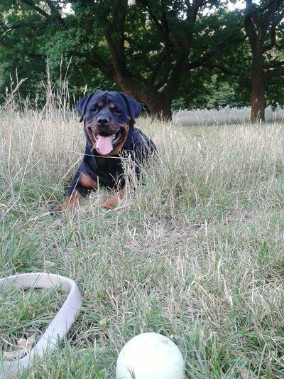 Freya (germanische Mythologie: die schöne Göttin, die des Frühlings, der Familie und der Liebe♡) Summer Dogs My Dogs Are Cooler Than Your Kids Unterwegsunddraußen Mein Hund Draußen Im Grünen