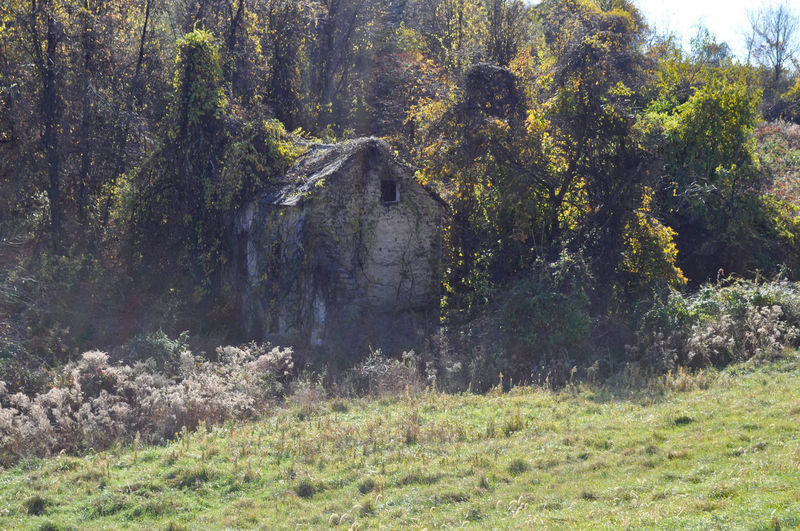 Overgrown Abandoned Farmhouse Farm Farmhouse Forgotten Overgrown Abandoned Architecture Beauty In Nature Built Structure Decaying Building Farm House Forest Growth Mountain Nature No People Outdoors Scenics Tranquility Woods