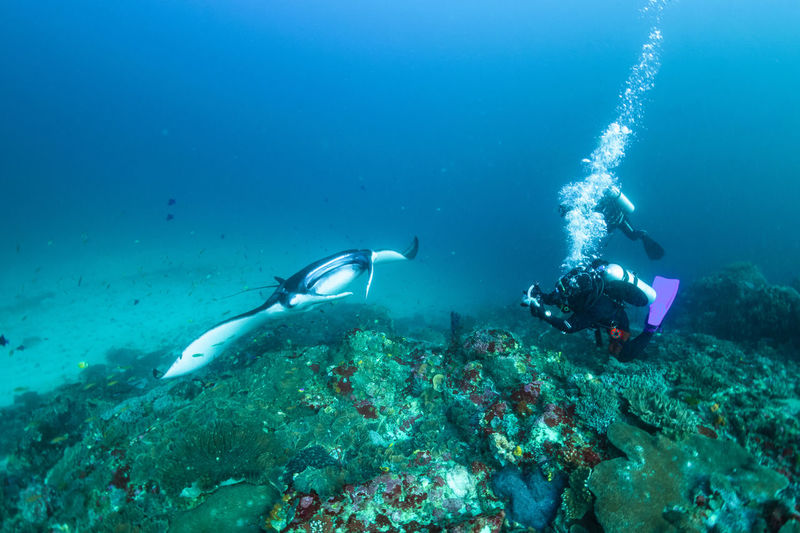 indonesia Underwater Sea UnderSea Water Scuba Diving Aquatic Sport Sport Swimming Adventure Unrecognizable Person Sea Life Exploration Diving Equipment Animal Diving Flipper Nature Animal Wildlife Animals In The Wild Marine Underwater Diving Diving Suit