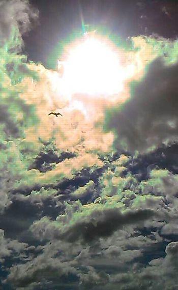 Sunny☀ Cloudporn Bird No_edits
