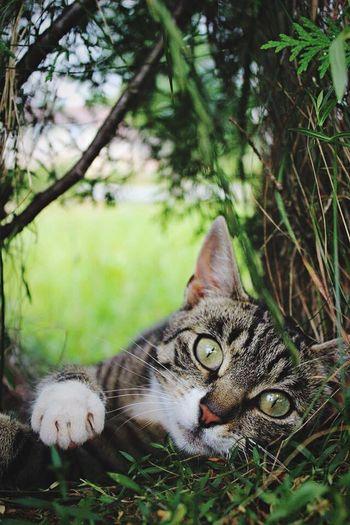 Cat♡ Catlover Catoftheday Catcollection Hello World Cute Pets Cutecat Enjoying Life